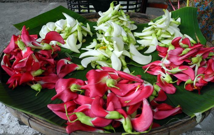 Fiore di Sesbania grandiflora