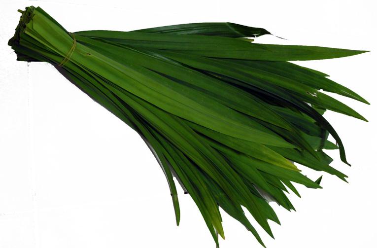 thailandia profumo erba