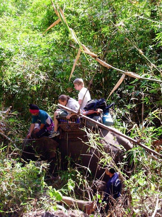 bambu elefante Intrecciare il bambù