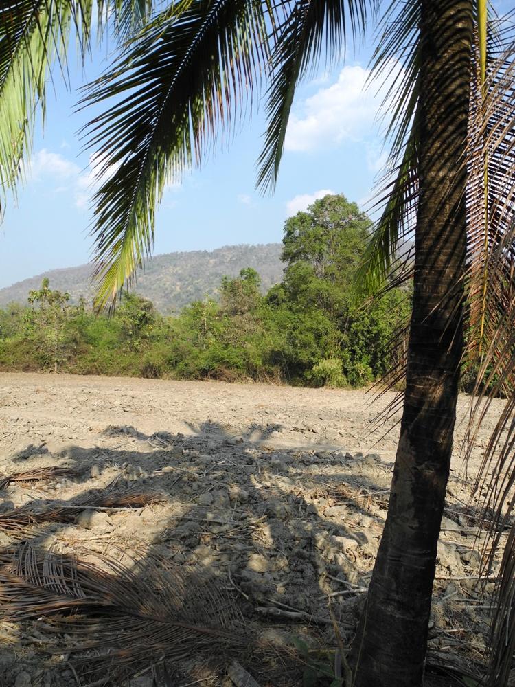 DSCN0775 Thailandia: nuovo piano forestale