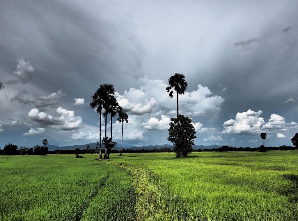 campo di riso 1024x759 Una poesia da dietro le sbarre