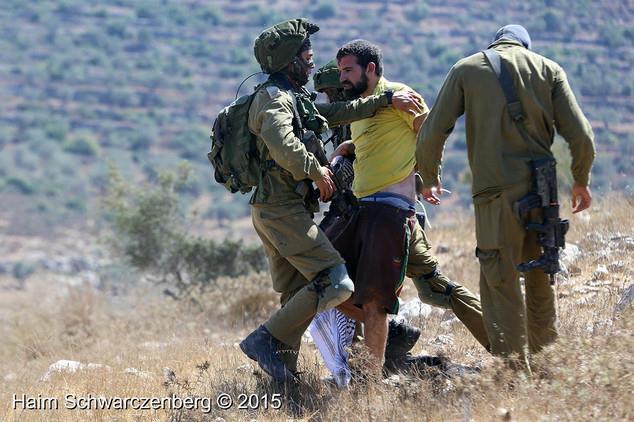 vittorio fera palestina