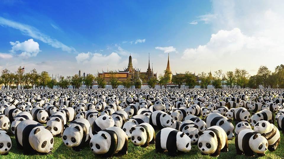 L'invasione dei mini-panda. Foto 1600 panda.