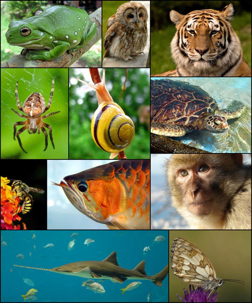 Animal_diversity_October_2007